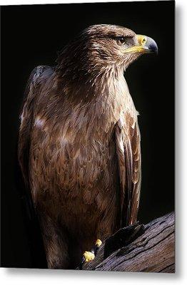 Hawk Metal Print by Paulette Thomas