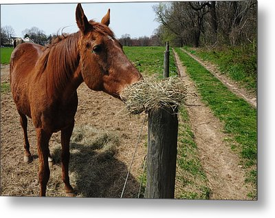 Hay Is For Horses Metal Print by Bill Cannon