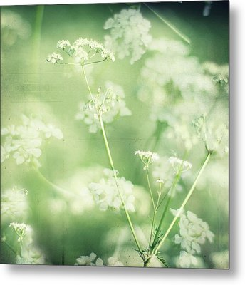 Hedgerow Blossom In Spring Metal Print by Nichola Sarah