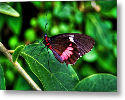 Hello Flutterby Metal Print by Randy Aveille