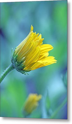 Hello World Metal Print by Becky Lodes