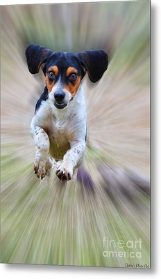 Here I Come Metal Print by Debbie Portwood