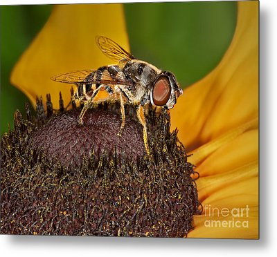 Here's Looking At You Metal Print by Susan Candelario