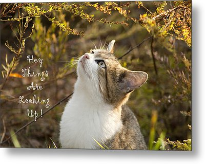 Hey Things Are Looking Up  Metal Print by Kathy Clark