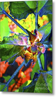 Hidden In Color Metal Print by Gwyn Newcombe