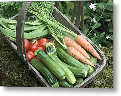 Home-grown Organic Vegetables Metal Print by Sheila Terry
