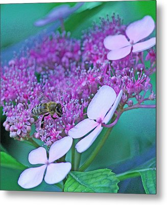 Honeybee On Pink Lace Metal Print by Becky Lodes