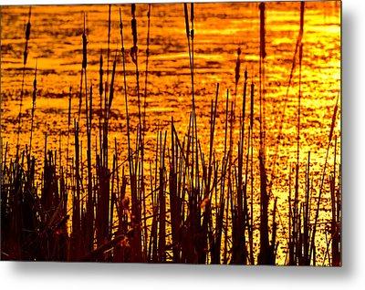 Horicon Cattail Marsh Wisconsin Metal Print by Steve Gadomski