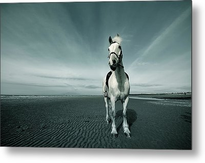 Horse At Irvine Beach Metal Print by Mikeimages