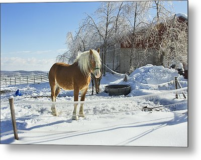Horse On Maine Farm After Snow And Ice Storm Photograph Metal Print by Keith Webber Jr
