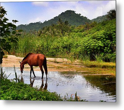 Horse With No Name Metal Print by Skip Hunt