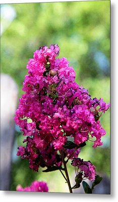Hot Pink Metal Print by Toni Hopper
