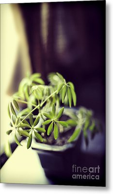 Houseplant Metal Print by HD Connelly