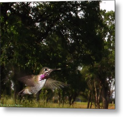 Hummer In Flight Metal Print by Joyce Dickens