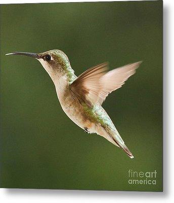 Hummingbird 1 Metal Print by Lori Whalen