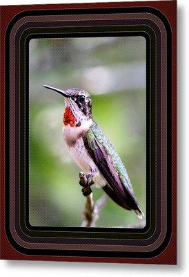 Hummingbird Card Metal Print by Travis Truelove