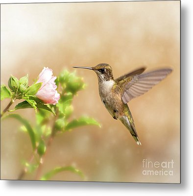 Hummingbird Hovering Metal Print by Sari ONeal