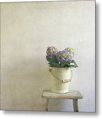 Hydrangea Resting On Stool Metal Print by Paul Grand Image