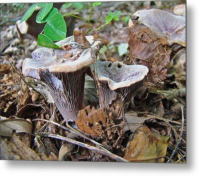 Hygrophorus Caprinus Mushrooms Metal Print by Mother Nature