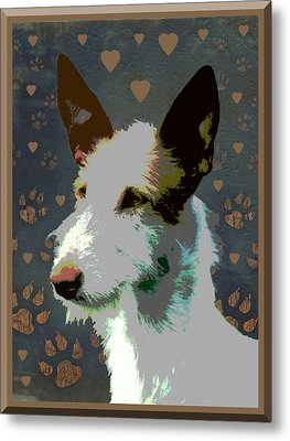 Ibizan Hound Metal Print by One Rude Dawg Orcutt