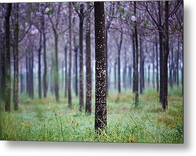 In Front Metal Print by Victor Bezrukov
