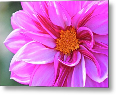 In Love With Pink Metal Print by Becky Lodes