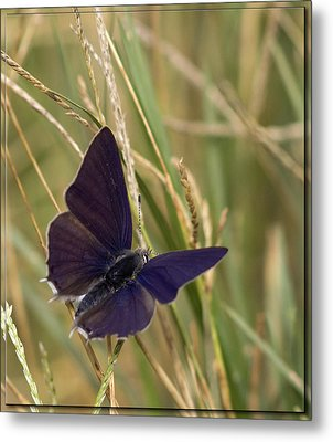 In The Grass Metal Print by Ronel Broderick