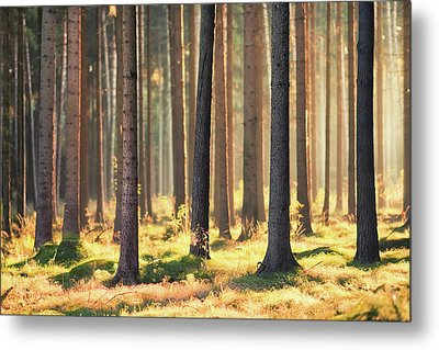 Indian Summer In Woods Metal Print by Matthias Haker Photography