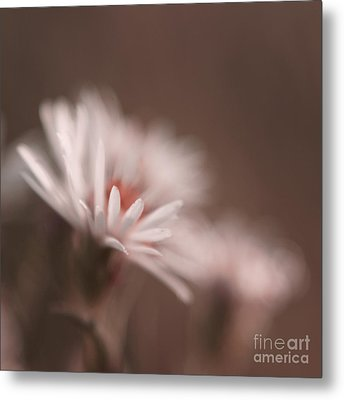 Innocence - 05-01a Metal Print by Variance Collections