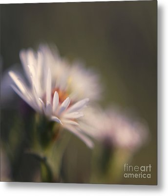 Innocence 02 Metal Print by Variance Collections