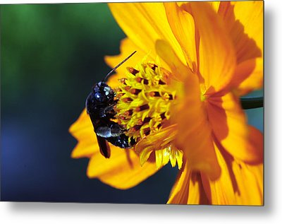 Insect And The Wild One Metal Print by Wanda Brandon
