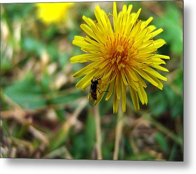 Insect On Flower Metal Print by Alessandro Della Pietra