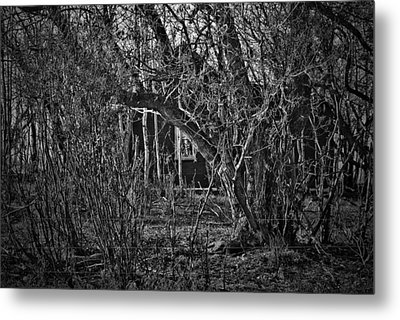 Into The Wilderness Metal Print by JC Photography and Art