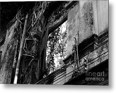 It Grows Metal Print by Dean Harte