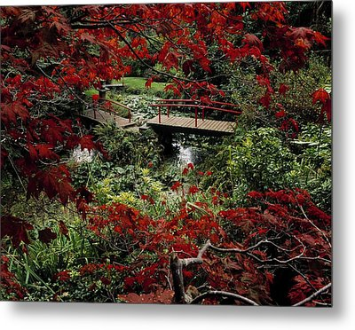 Japanese Garden, Through Acer In Metal Print by The Irish Image Collection
