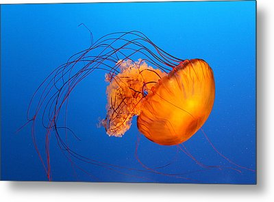 Jellyfish Metal Print by Viviana Singh