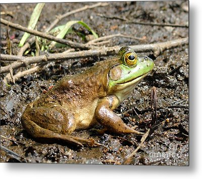 Jeremiah Metal Print by Meandering Photography