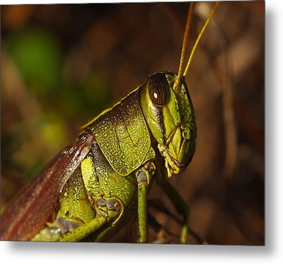 Jiminy Cricket Never Looked This Good Metal Print by Billy  Griffis Jr