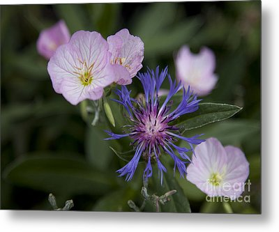 Joined Metal Print by Amanda Barcon