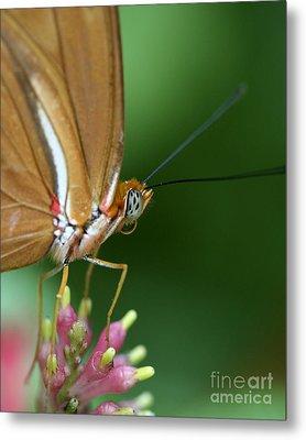 Julia Butterfly Metal Print by Pamela Gail Torres