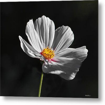 Just A Flower Metal Print by Mitch Shindelbower