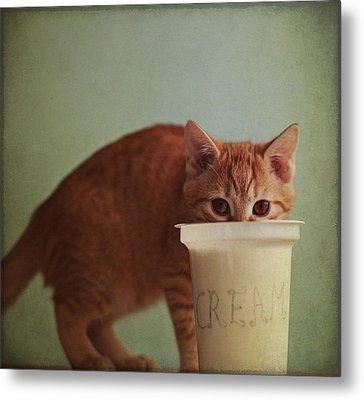 Kitten Eating From Big Pot Of  Cream Metal Print by By Julie Mcinnes