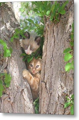 Kittens On A Tree Metal Print by Michaline  Bak