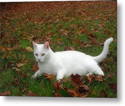 Kitty In The Leaves Metal Print by Tyra  OBryant