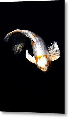 Koi From Above Metal Print by Don Mann