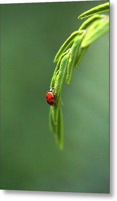 Ladybug 1 Metal Print by Pan Orsatti