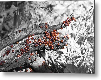 Ladybugs Metal Print by Molly Heng