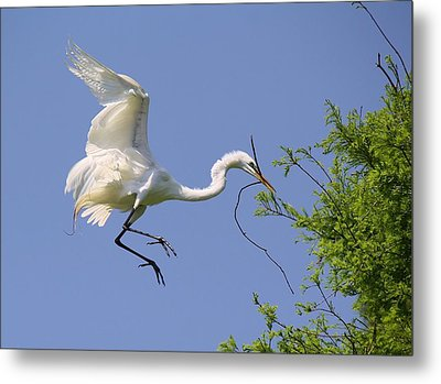 Landing Gear Down Metal Print by Paulette Thomas