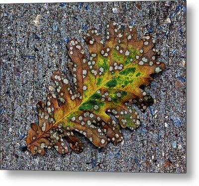 Leaf On The Sidewalk Metal Print by Robert Ullmann