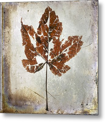 Leaf  With Textured Effect Metal Print by Bernard Jaubert